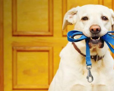 Як вибрати амуніцію для собак?