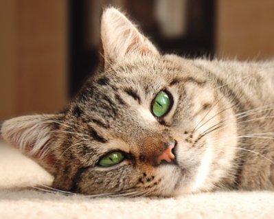 Який вибрати корм для кішок